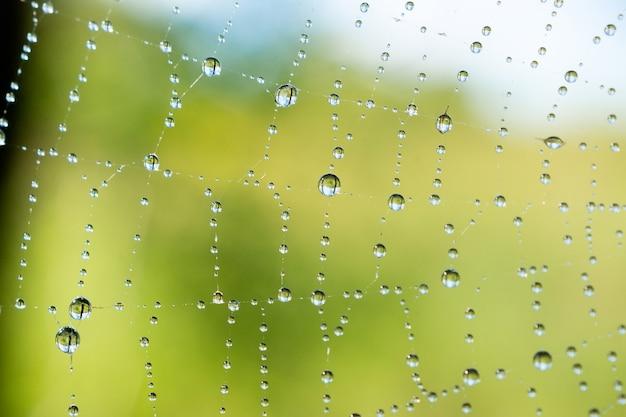 Spinnenweb met waterdruppels