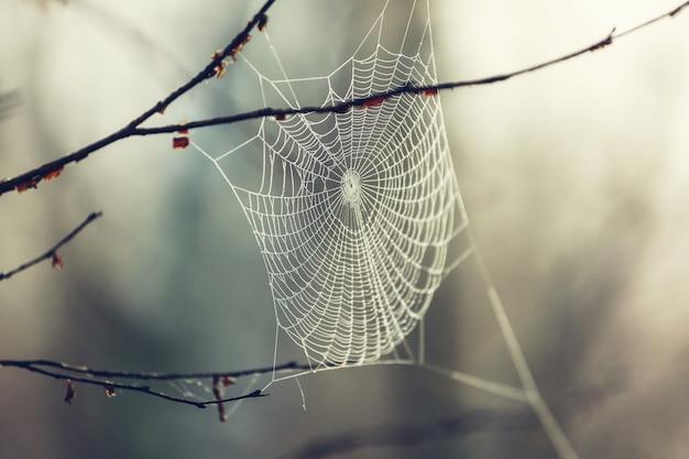 Spinnenweb op de herfst