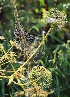 Spinnenwebben in het gras. stelen van wilde bloemen in de vroege ochtend early