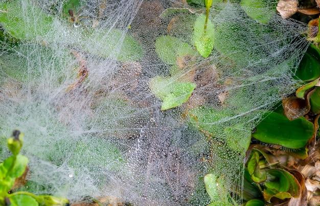 Spinnenwebben op het gras met waterdruppels van de ochtenddauw, in ondiepe focus. natuurlijke achtergrond.