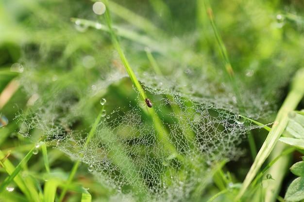 Spinneweb dauw druppel water