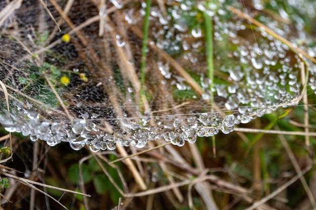 Spinneweb met hangende druppels