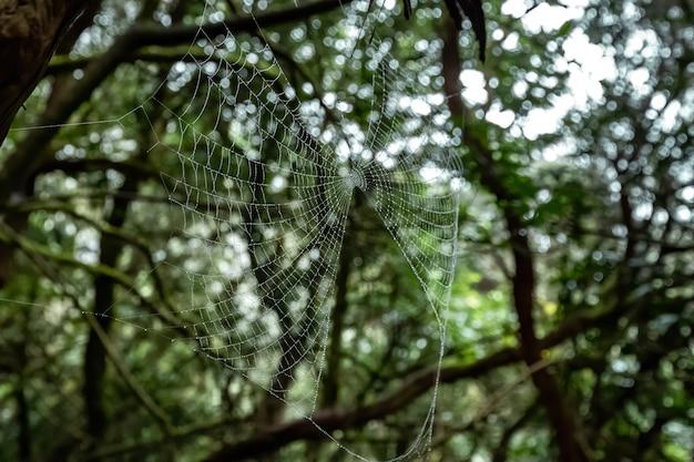 Spinneweb met waterdruppeltjes in een bos
