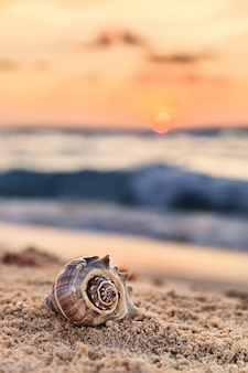 Spiraalvormige shell op sandy tropical beach bij zonsopgang in mexico, verticale samenstelling