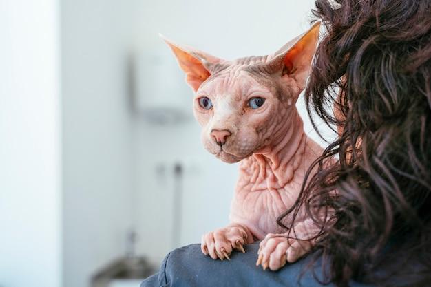 Spoedeisende dierenkliniek. snelle diagnose van ziektesymptoom voor uw huisdier.