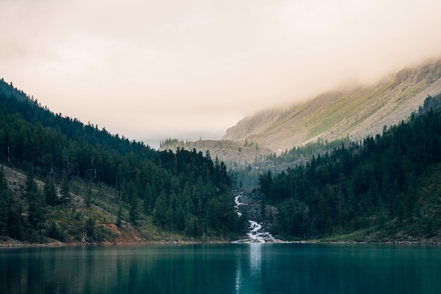 Spookachtig bos dichtbij bergmeer in vroege ochtend
