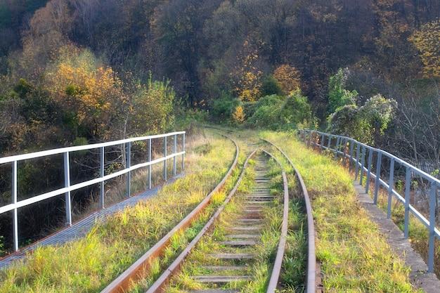Spoorlijn in het bos