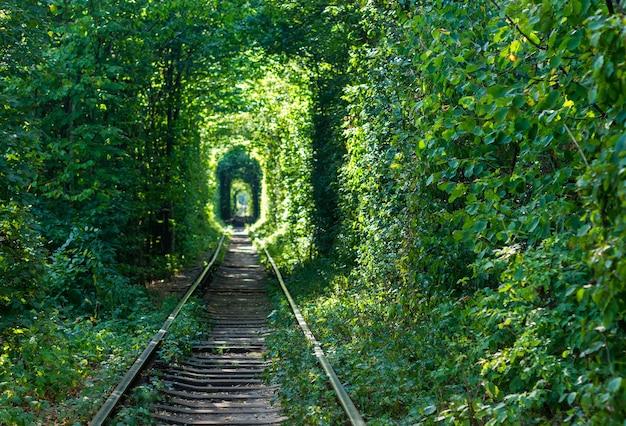 Spoorweg door het bos. tunnels van liefde.