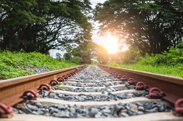 Spoorweg met steen die het bos overgaat
