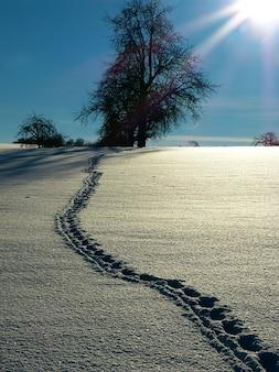 Sporen sneeuw winter zon boom