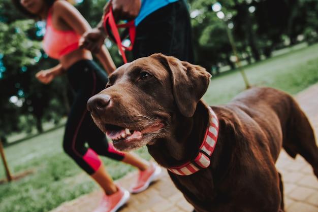 Sportieve mensen en bruine schattige hond in hout
