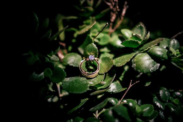 Sprankelende gouden trouwringen liggen op groene bladeren van geldboom