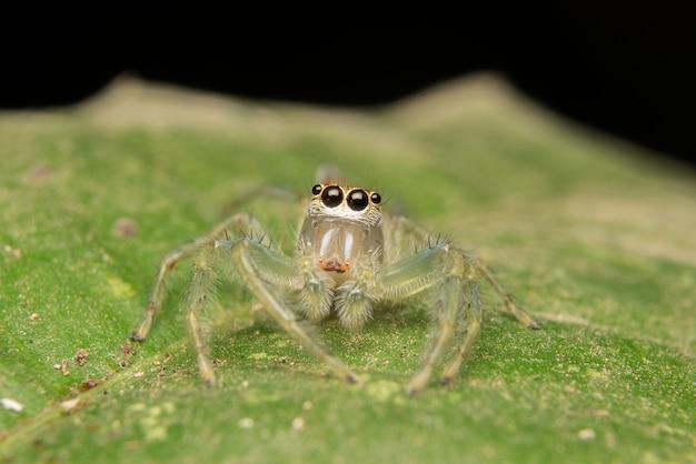 Springende spider roofdier natuur habitat