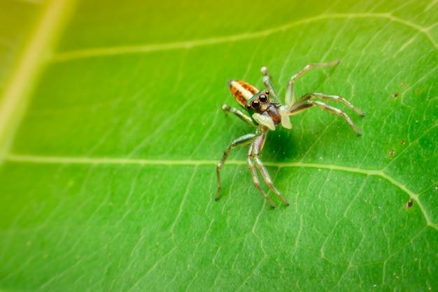 Springende spin op blad groene achtergrond