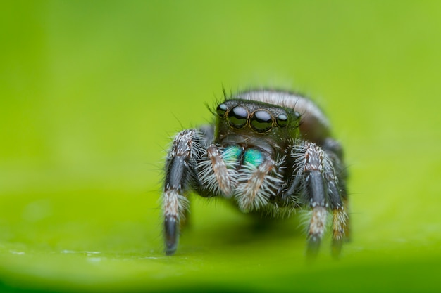 Springende spin op groen blad in aard