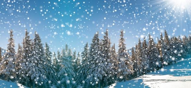 Sprookjesachtig winterlandschap. pijnbomen met sneeuw en vorst op berghelling verlicht door felle zonnestralen op blauwe lucht en vallende sneeuwvlokken kopiëren ruimte achtergrond. gelukkig nieuwjaar en vrolijke kerstkaart.