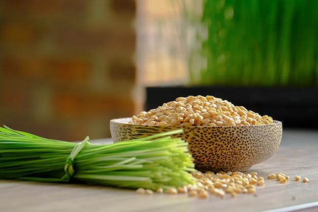 Sprout wheat, tarwegras voor sap en gezond leven