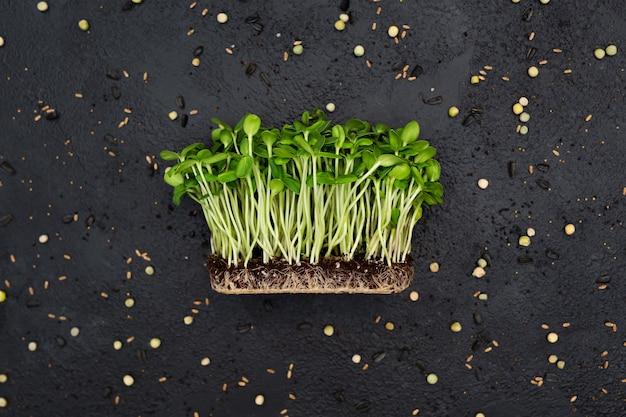 Spruiten groente zonnebloem micro, microgeen