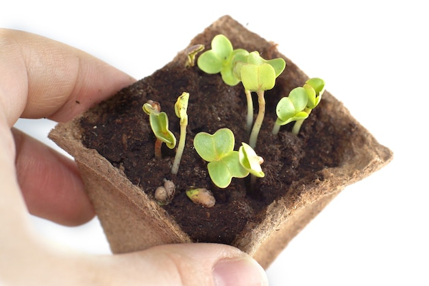 Spruiten in de grond, vingers raken de jonge scheut van de plant
