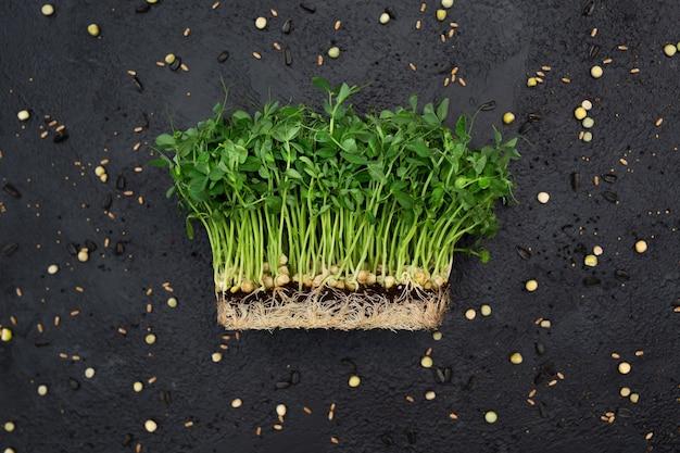 Spruitengroente van erwten, microgrid, gezond voedsel.