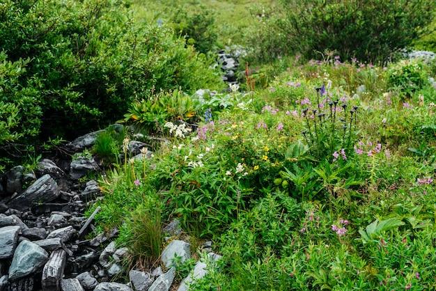 Spruitstuk van kruiden en bloemen dichtbij bronwater onder stenen. stroom van het berg de duidelijke water dichtbij bont grassen. rijke vegetatie van hooglanden. kleine rivier onder rijke flora. schoonheid van de alpine natuur.