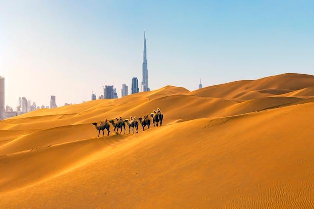 Stad dubai in de woestijn