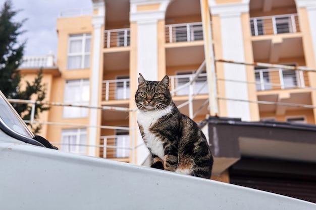 Stad zwerfkat zittend op de motorkap van een auto op een wazige stadsachtergrond