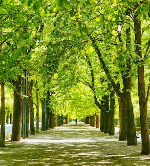 Stadspark met groene bomen