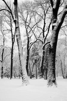 Stadspark na sneeuwval. grafische zwart-wit afbeelding van de w