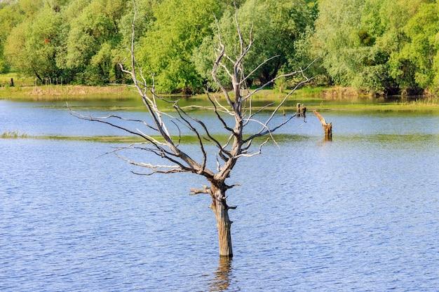 Stam van een gedroogde boom in het water tijdens de voorjaarsvloed