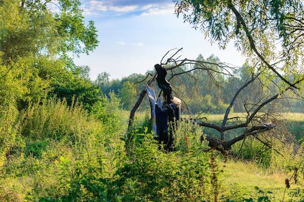 Stam van gebroken boom op de rivieroever tegen groene bomen en blauwe hemel met wolken op zonnige zomerdag. rivierlandschap