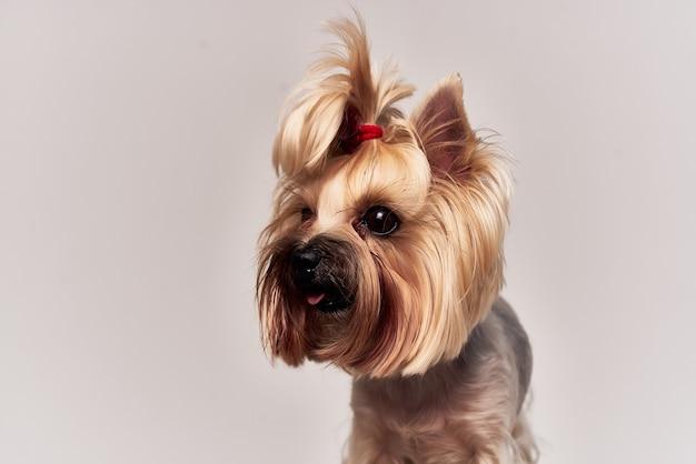 Stamboom hondenkapsel voor dierenstudio