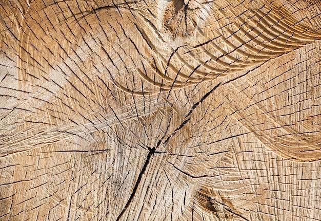 Stammen berken gezaagd en bedekt met scheuren, aan het oppervlak zijn er veel sneden en onregelmatigheden zoals na het snijden op hout
