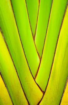 Stammen van bananenplanten. abstracte boomachtergrond. structuur van een decoratieve bananentak