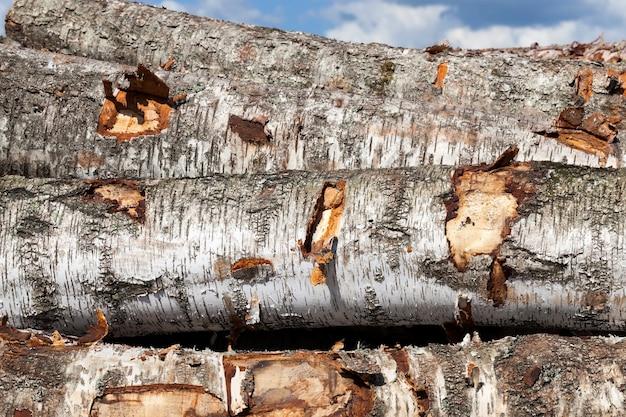 Stammen van berken die voor de houtbewerking in een stapel liggen, zijaanzicht van een zwart-witte schors van planten