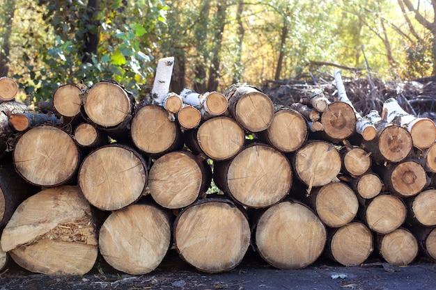 Stammen van bomen gesneden en gestapeld op de voorgrond