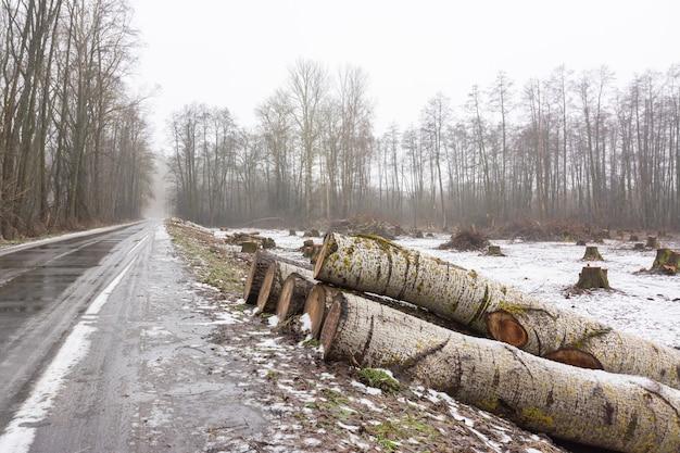 Stammen van gekapte bomen in de buurt van de weg wachten op transport naar de meubelfabriek