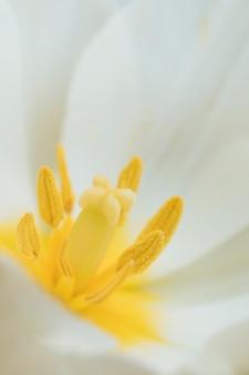 Stampers van prachtige exotische witte bloem
