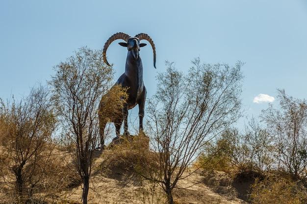 Standbeeld van een bergschaap, argali, in de steppen van kazachstan