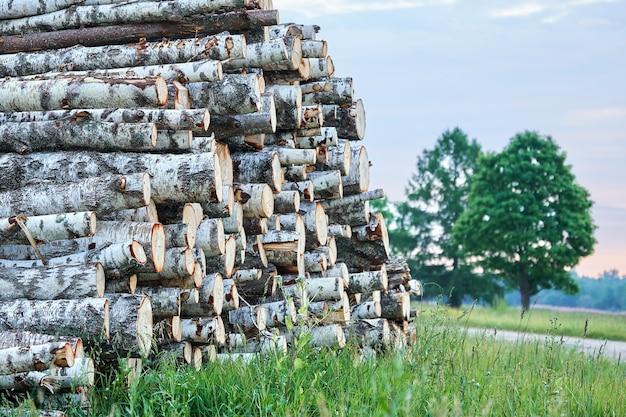 Stapel berkenboom logboeken liggend op het groene gras buiten in zomeravond. gezaagde boomstammen