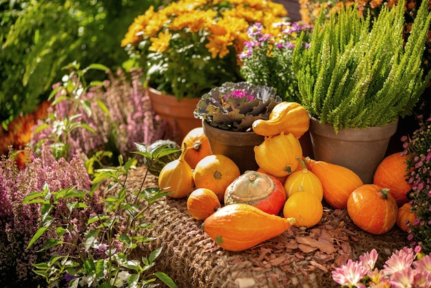 Stapel geoogste kleine oranje pompoenen op ruwe jute tussen ingemaakte bloemen en heide