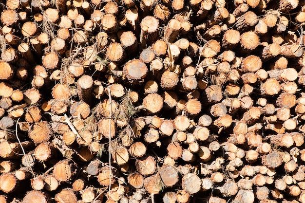 Stapel gesneden boomstammen van de pijnboomboom