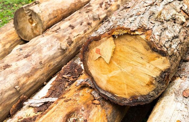 Stapel gesneden boomstammen