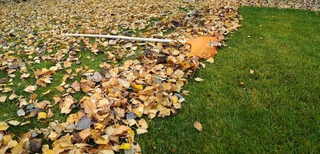 Stapel herfstbladeren met ventilatorhark op gazon.