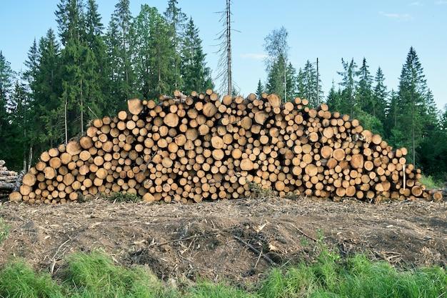 Stapel houten logboeken die op de grond voor het bos liggen. gezaagde boomstammen