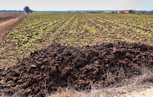 Stapel mest die door een boer in een veld is gedumpt om de landbouwgrond te bemesten voor de volgende oogst. landbouw