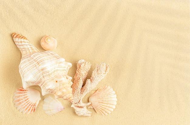 Stapel schelpen op zand. zomer ontspannen concept. bovenaanzicht, kopieer ruimte