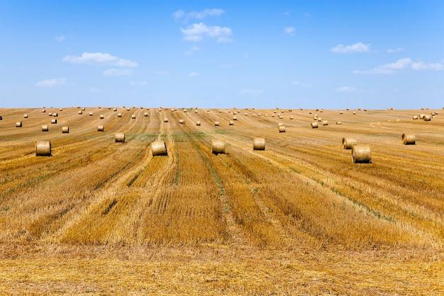 Stapel stro een landbouwgebied waar geoogste granen en stro in een stapelzomer worden verzameld