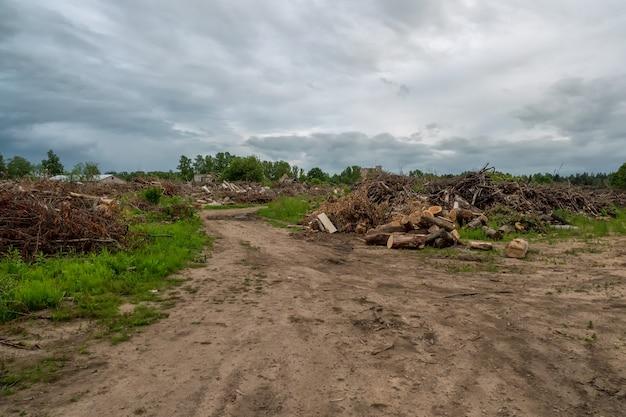 Stapel van grenen logt in een zagerij voor verdere verwerking. een gebied met verspreide gekapte bomen