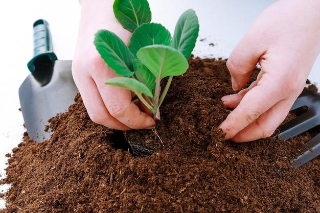 Stapel vruchtbaar land op een witte achtergrond. kool planten in plastic potten